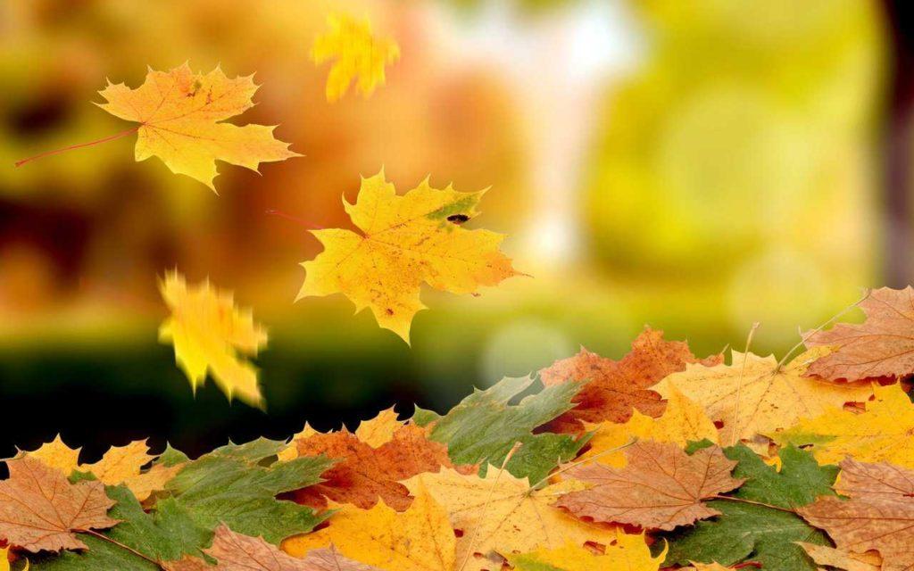 Осенняя учебная смена
